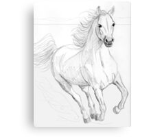 Running Arabian Horse Pencil Drawing Canvas Print