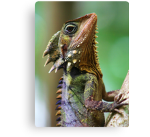 Dragon of the Daintree Canvas Print