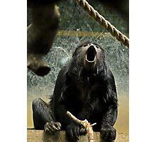 Howler Monkey or Yawning Monkey? Photographic Print