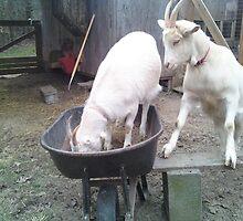 Last One in is a Rotten Egg-lol-lol-! Got Goat's? by RealPainter
