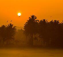 golden fields by Dinni H