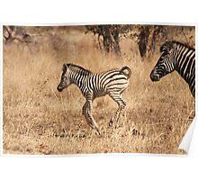 Family Stripes Poster