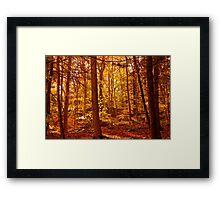Warm Autumn Afternoon Framed Print