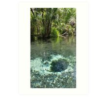 Seven Sisters Florida freshwater springs Art Print