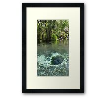 Seven Sisters Florida freshwater springs Framed Print