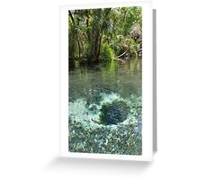 Seven Sisters Florida freshwater springs Greeting Card