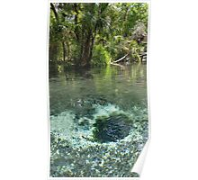 Seven Sisters Florida freshwater springs Poster