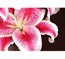 Pink Lily Macro Close Up Photographic Print