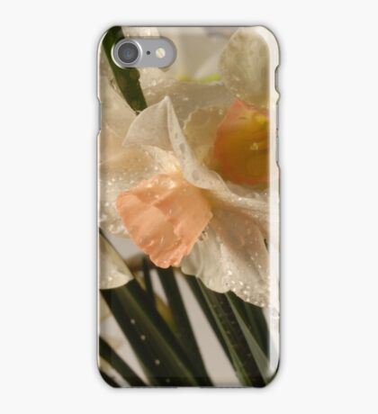 Dewy Small Daffodils with Peach Centers iPhone Case/Skin