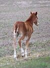 Cute Filly....Butt by BettyEDuncan