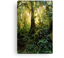 in the light of our elders Canvas Print