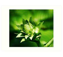 Layered Green Buds Art Print