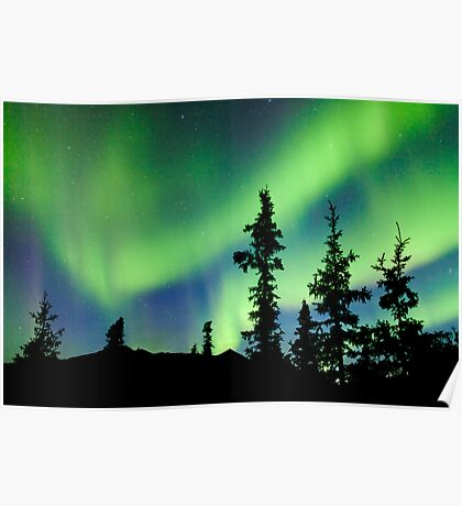 Northern Lights Aurora borealis over Yukon taiga spruce Poster