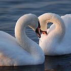 Swans in Love! by Jonathan Goddard