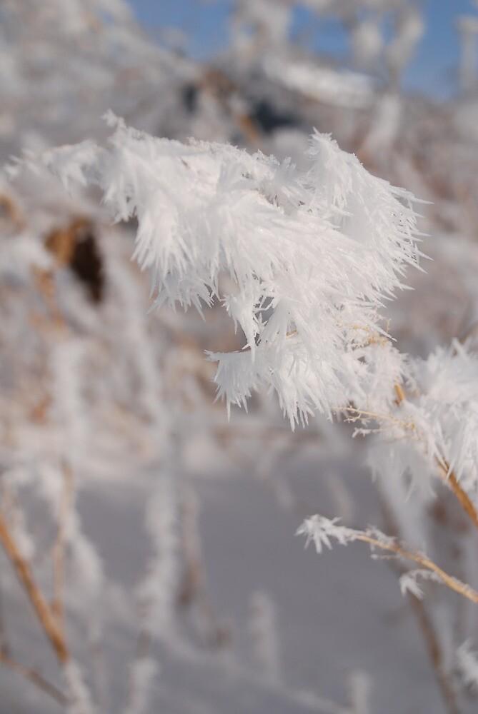 A Garden Full of White by hmarg06