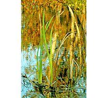 Nature Rippled Photographic Print