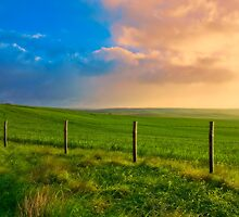 Green, Green Grains at Sunrise by Mark Richards