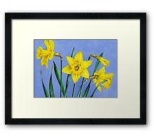Yellow Daffodils Watercolor Framed Print