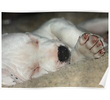 Let sleeping dogs lie! Poster