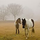 Horses in the mist by carlosramos