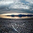Feather on the Shore: Salton sea by toby snelgrove  IPA