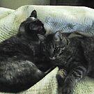 Catnapping by PhotosbyNan