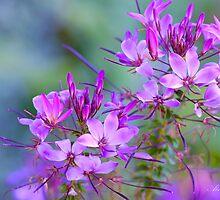 Flowers by Alana Ranney