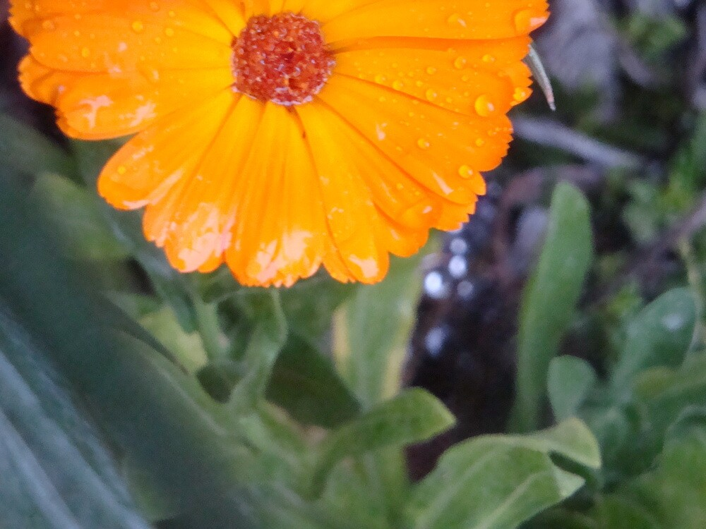 There is still Brightness on a Rainy Day by AllisonRhodes