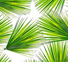 Tropical Exotic Hawaiian Palm Fronds by Blkstrawberry