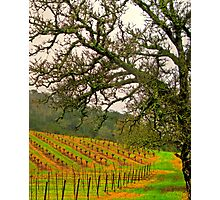 napping valley Photographic Print