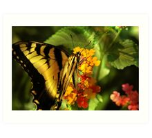 """""""BORN TO FLY """" NOT TO DIE Art Print"""