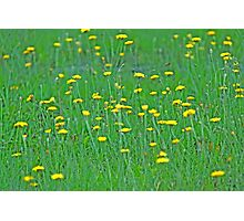 Yellow Sprinkles Photographic Print