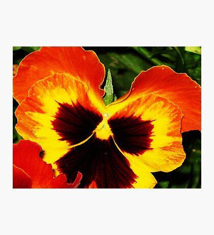 Sunset Petals Photographic Print