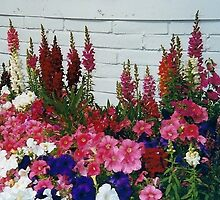 Glorious Snapdragons! by Pat Yager