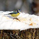 Small Birds in Geneva by David Freeman