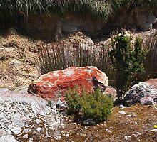 Limestone, lichen, and a solitary orange everlasting by Jane Bouchard