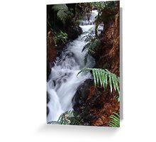 Forest Cascade, Rotorua, New Zealand Greeting Card