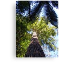 Redwood Forest, Rotorua, New Zealand Canvas Print