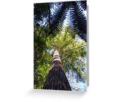 Redwood Forest, Rotorua, New Zealand Greeting Card