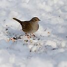 Dunnock 1 by David Freeman