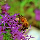Pollen Collector by Catherine  Howell