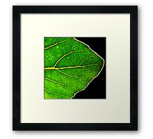 A New Leaf Framed Print