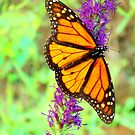 Old Butterfly by Catherine  Howell