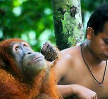 Orangutan rescue centre in Sumatra by leannepapas