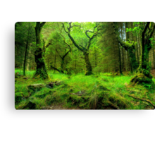 The Heart Of The Forest Canvas Print