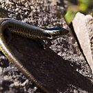 Skink by Pascal and Isabella Inard