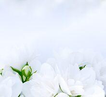Romantic Jasmine by Digifuture