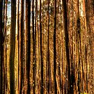 Bushfire Abstract -The HDR Experience by Philip Johnson