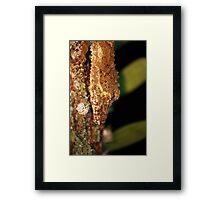 leaftail gecko closeup Framed Print