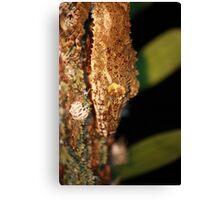 leaftail gecko closeup Canvas Print